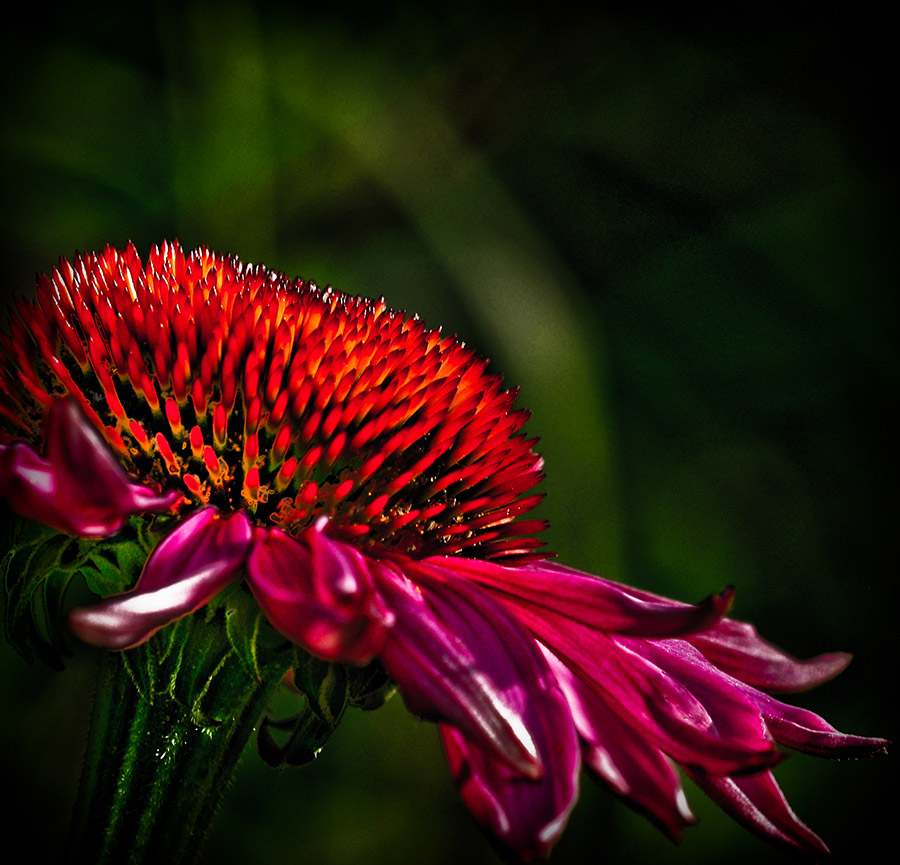 "photo ""Glowing in the dark"" tags: nature, flowers"