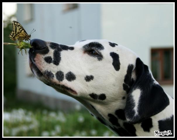 """фото """"Пятнистое чудо!"""" метки: природа, портрет, домашние животные"""