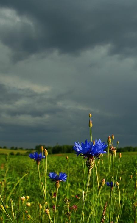"photo ""***"" tags: nature, landscape, clouds, flowers"