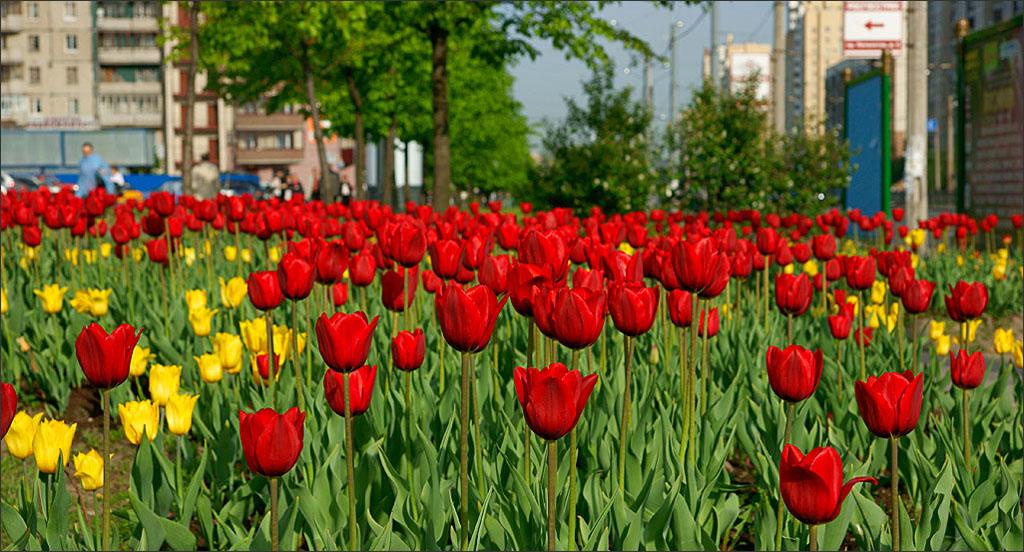 хочу картинки цветы городские цветы один спиртной напиток