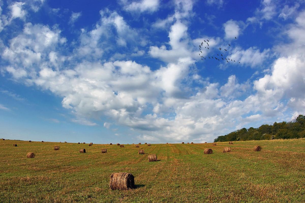 """фото """"Вересень"""" метки: пейзаж, осень"""