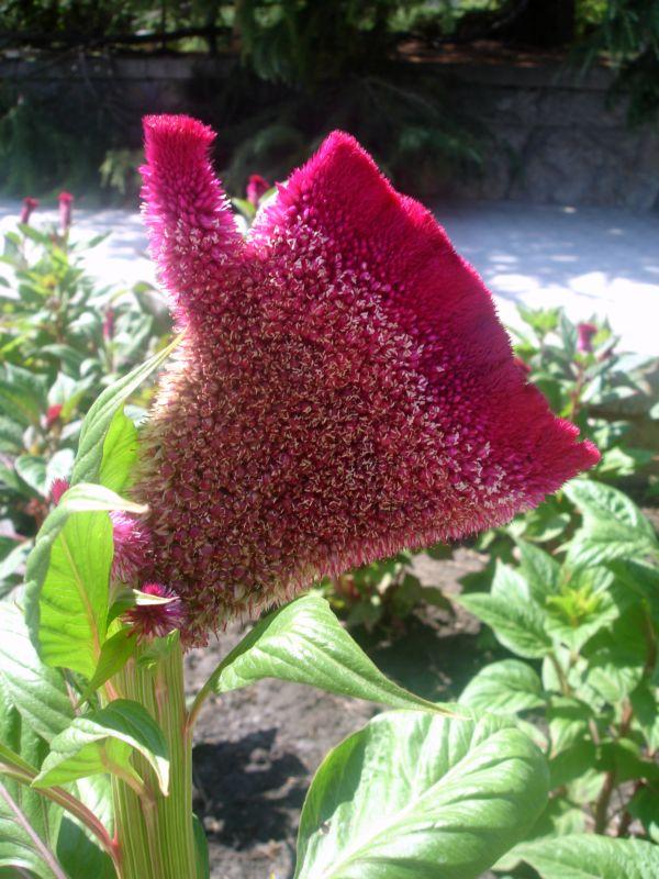 "фото ""Чудо"" метки: природа, цветы"