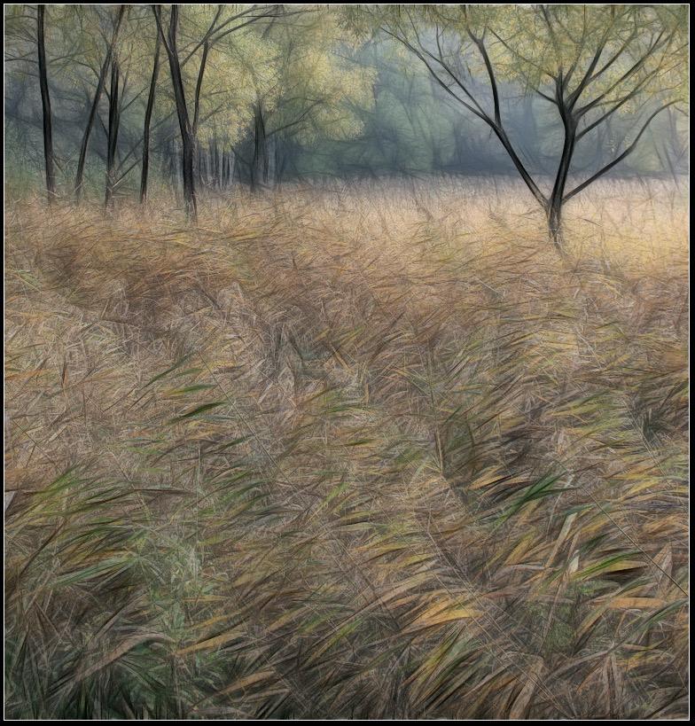 """photo """"Autumn"""" tags: landscape, autumn, forest"""