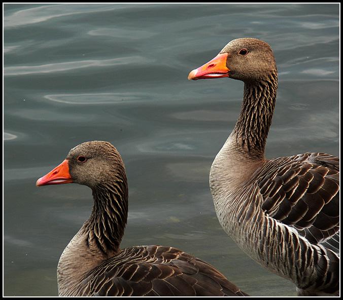 "фото ""Two gather...together"" метки: природа, дикие животные"