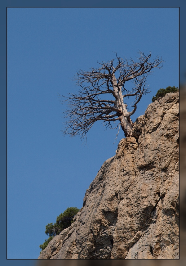 """фото """"Устремляясь к небу"""" метки: пейзаж, горы"""