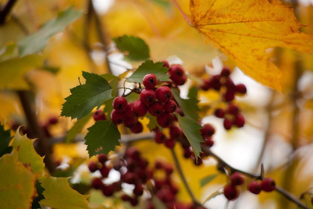 """фото """"Созрели"""" метки: пейзаж, осень"""