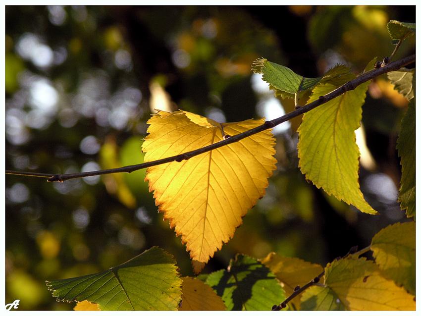 """фото """"Осенний фонарик"""" метки: пейзаж, природа,"""