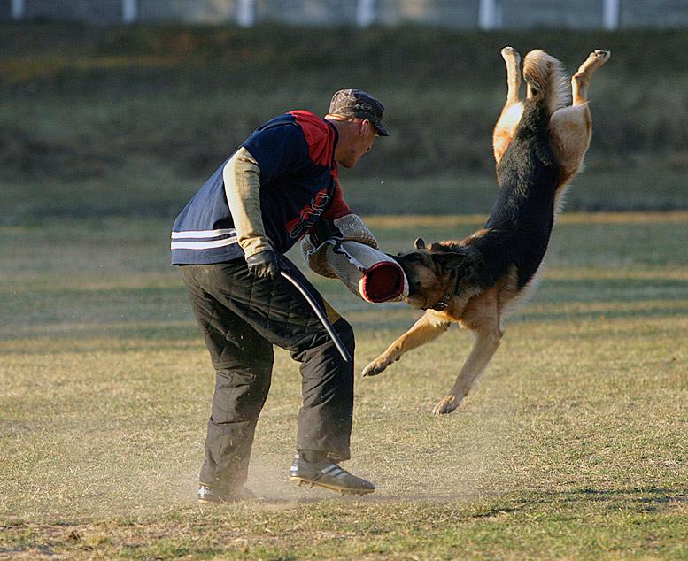 "фото ""Атака"" метки: природа, репортаж, домашние животные"