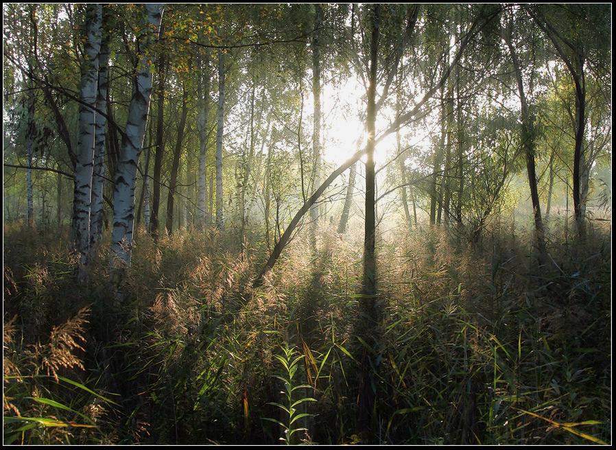 """фото """"Осенний свет"""" метки: пейзаж, лес, осень"""