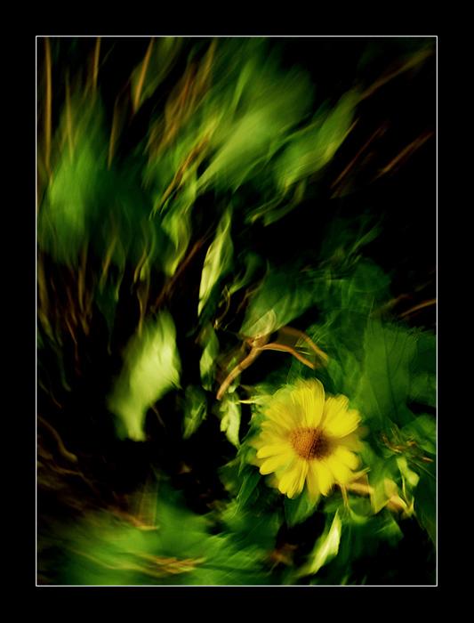 """фото """"когда цветет папороть"""" метки: природа, цветы"""