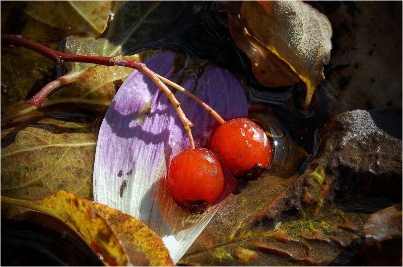 """фото """"Осенние забавки"""" метки: макро и крупный план, природа, цветы"""