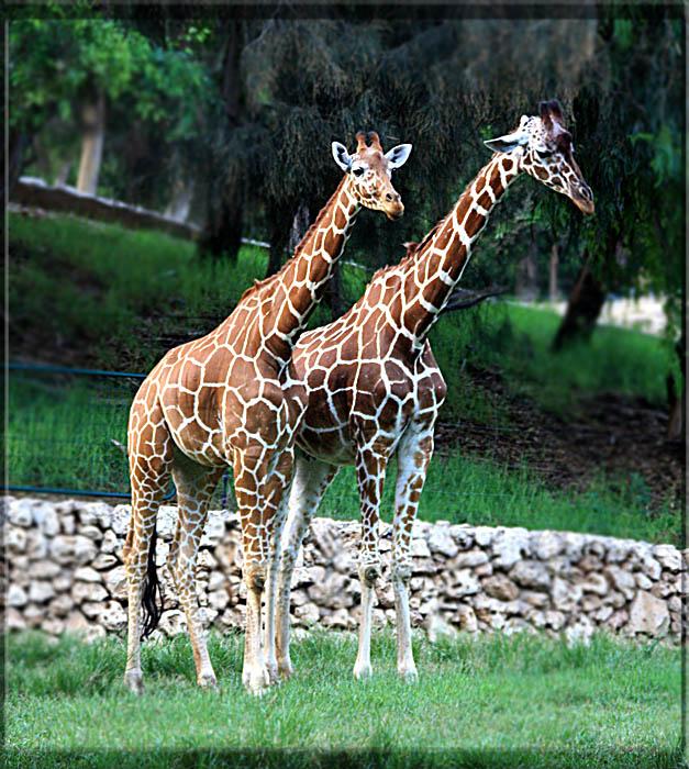"""фото """"Рома и Юля"""" метки: природа, дикие животные"""