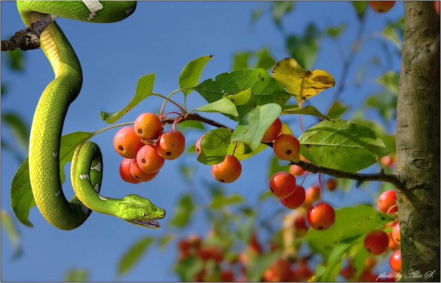 Дерево райского сада 2 100
