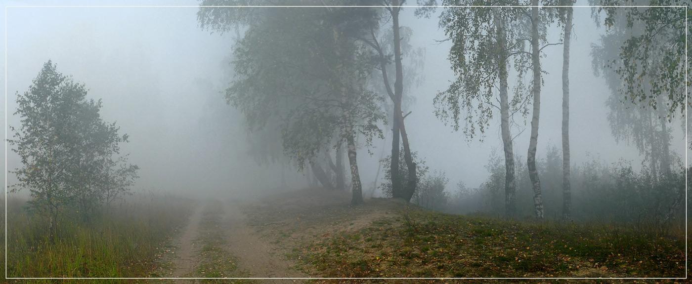"""фото """"Утро туманное 10"""" метки: пейзаж, лес, осень"""