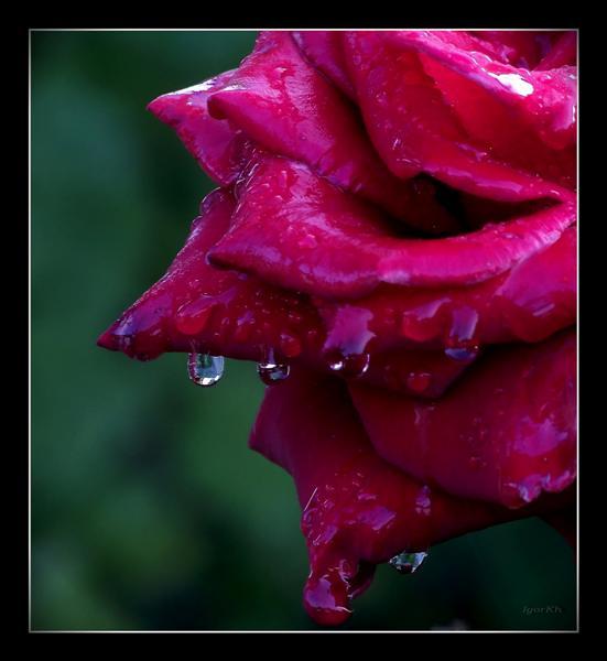 """фото """"Fragment №3 ( очень мокрый )"""" метки: фрагмент, природа, цветы"""
