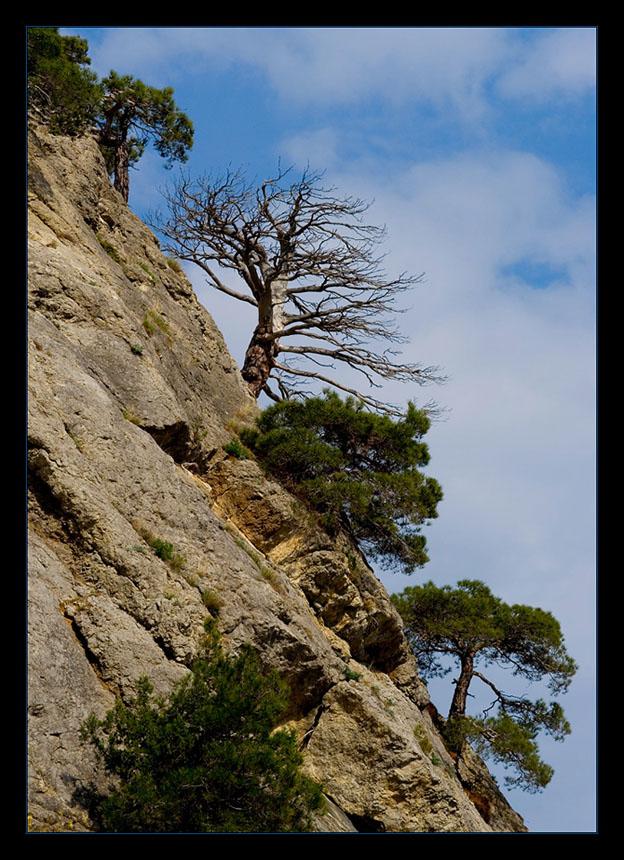 """фото """"Камни. Сосны. Крым"""" метки: пейзаж, горы"""