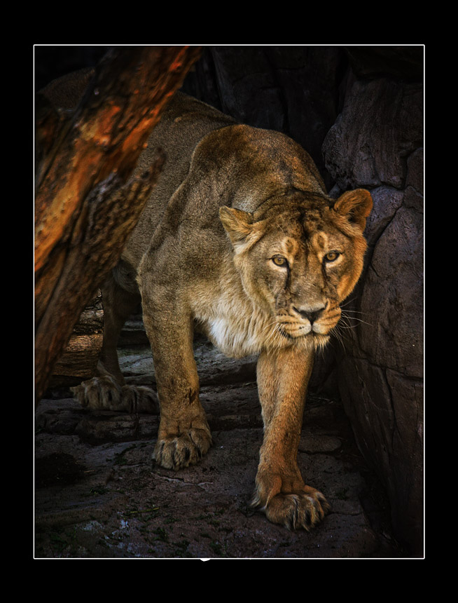 """фото """"Царица"""" метки: природа, дикие животные"""