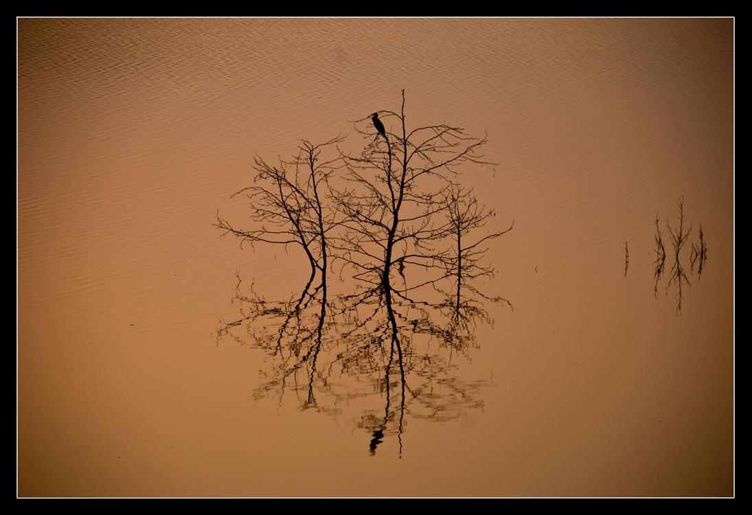 """фото """"Reflections"""" метки: ,"""
