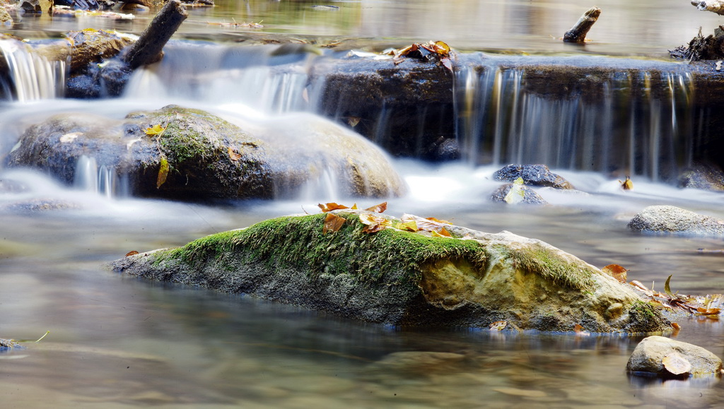 """фото """"молочные реки"""" метки: пейзаж, разное, лес"""