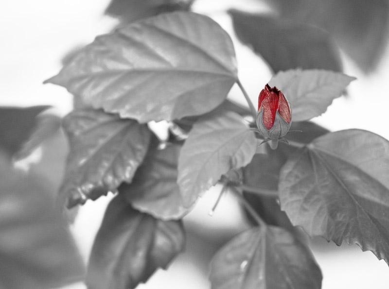 """фото """"Новое"""" метки: природа, цветы"""