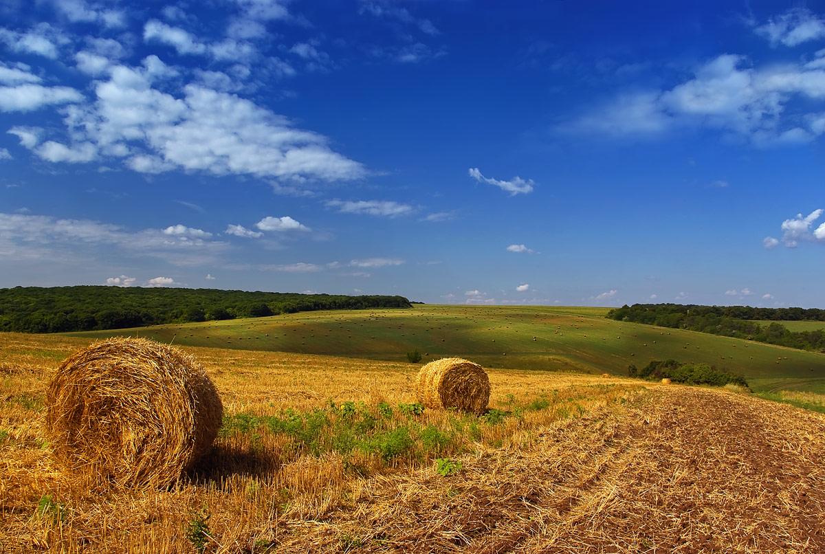 """фото """"Уж собраны с полей хлеба ...."""" метки: пейзаж, лето"""