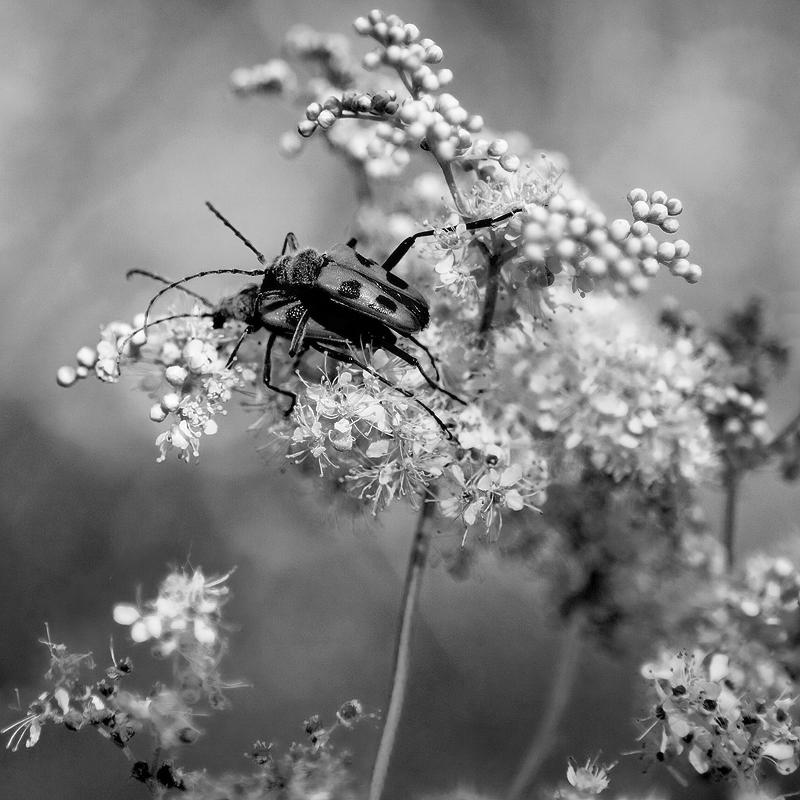 "фото ""."" метки: природа, насекомое"