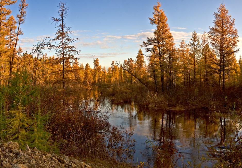 """фото """"Осенняя  пора..."""" метки: пейзаж, лес, осень"""