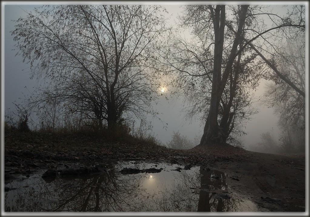 """фото """"Октябрь.Утро."""" метки: пейзаж, лес, осень"""