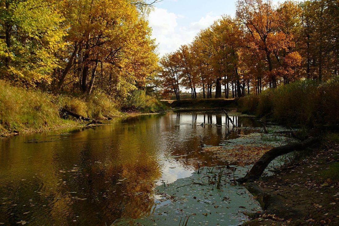 "фото ""Речка."" метки: пейзаж, вода"