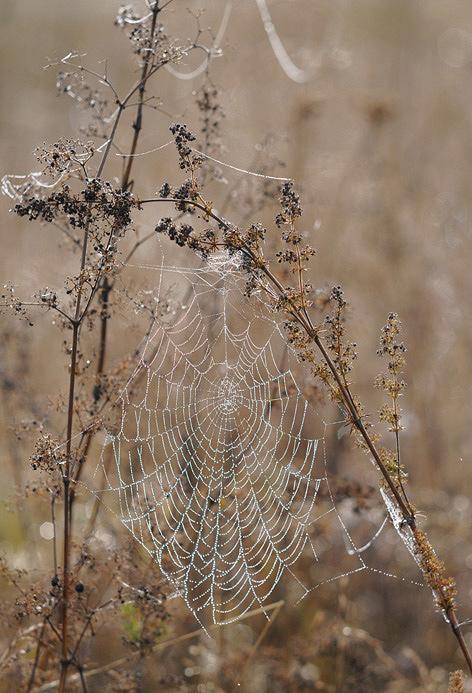 """фото """"Осенние росы"""" метки: природа, цветы"""