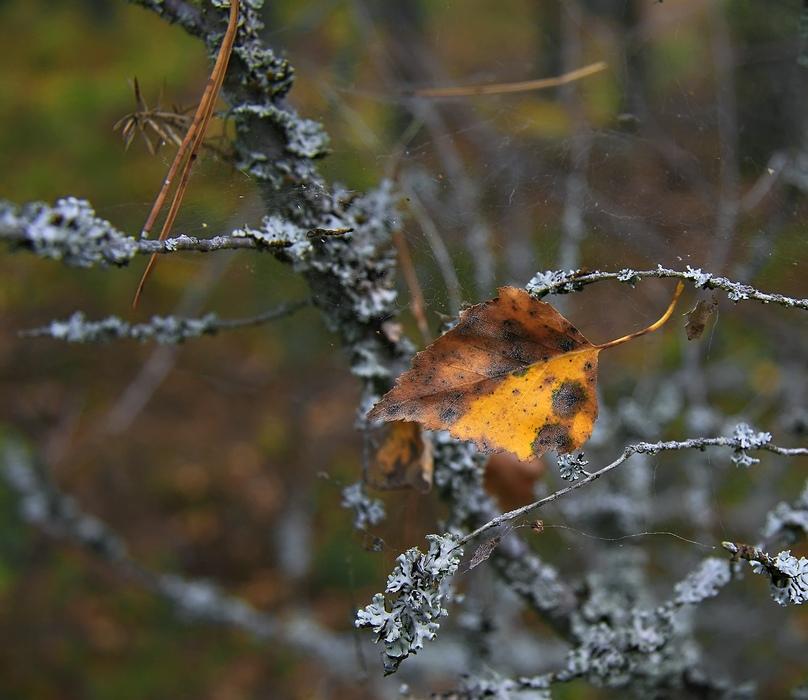 """фото """"Октябрьская"""" метки: пейзаж, природа, осень, цветы"""