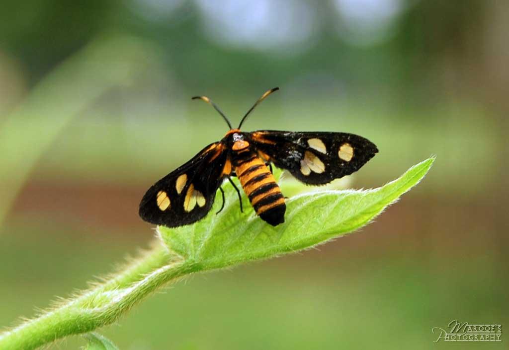 """фото """"BUG"""" метки: природа, насекомое"""