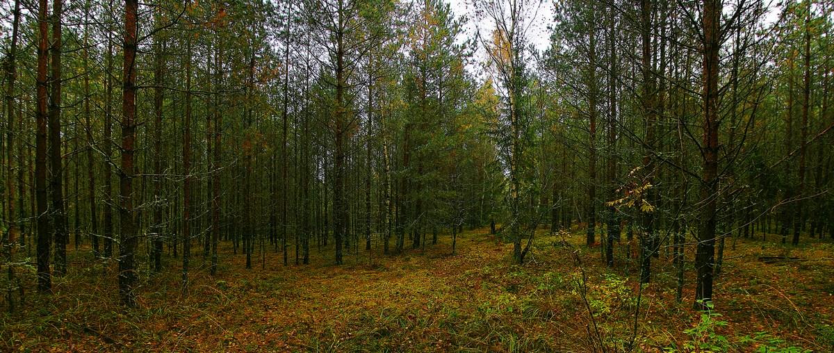 """фото """"Лесная осенняя"""" метки: пейзаж, осень"""