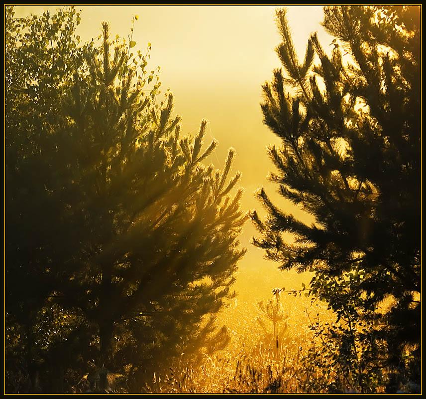 """фото """".... а дальше - только свет....."""" метки: пейзаж, осень"""