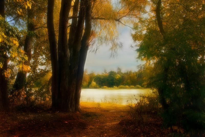 """фото """"Осенний полонез # 3"""" метки: пейзаж, лес, осень"""