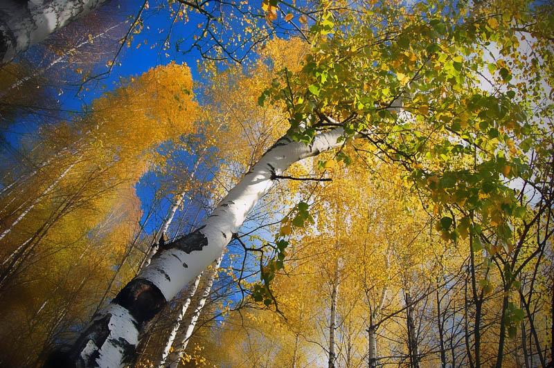 """фото """"Акварельный октябрь"""" метки: пейзаж, осень"""