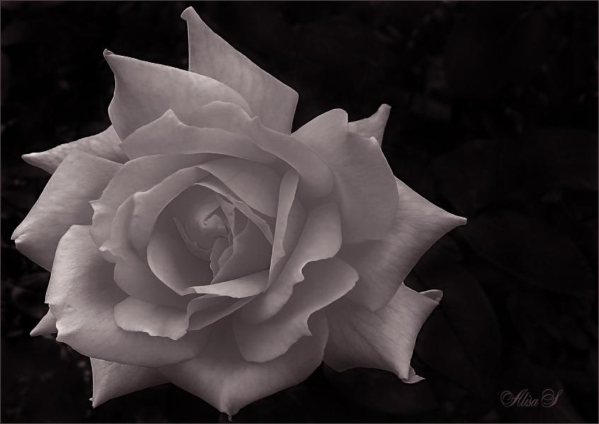 """фото """"-=-"""" метки: природа, цветы"""
