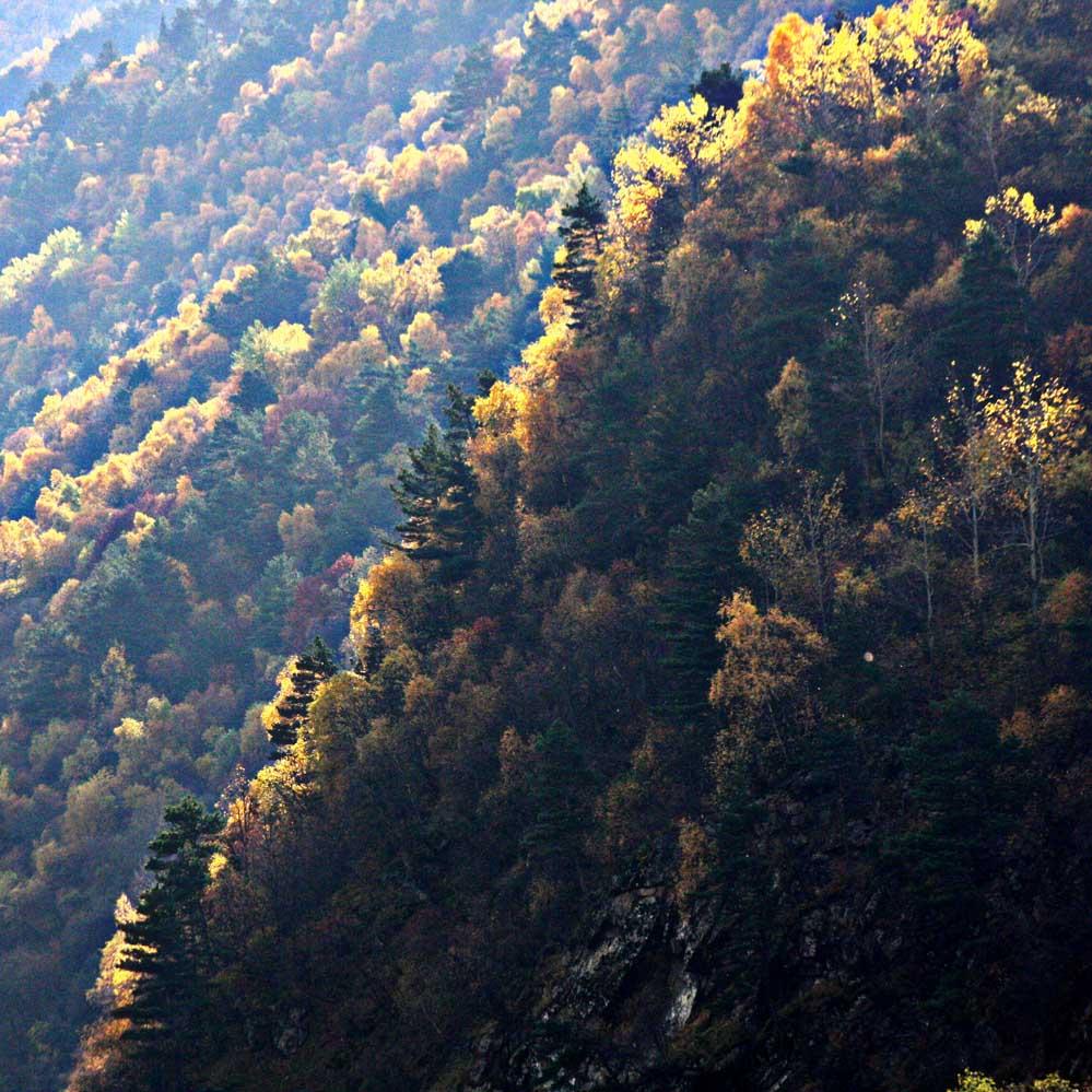 """фото """"***"""" метки: пейзаж, горы, лес"""