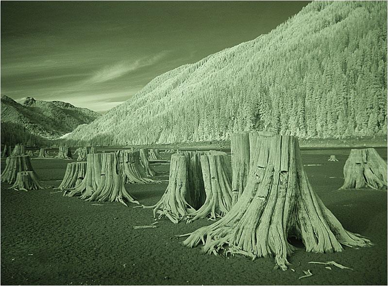 """фото """"Идущие в ногу"""" метки: пейзаж, черно-белые,"""