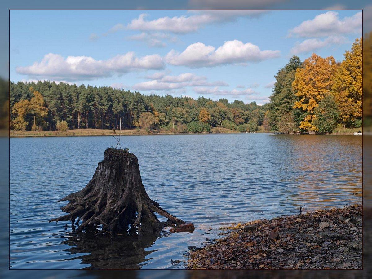 "фото ""На пруду"" метки: пейзаж, вода, осень"