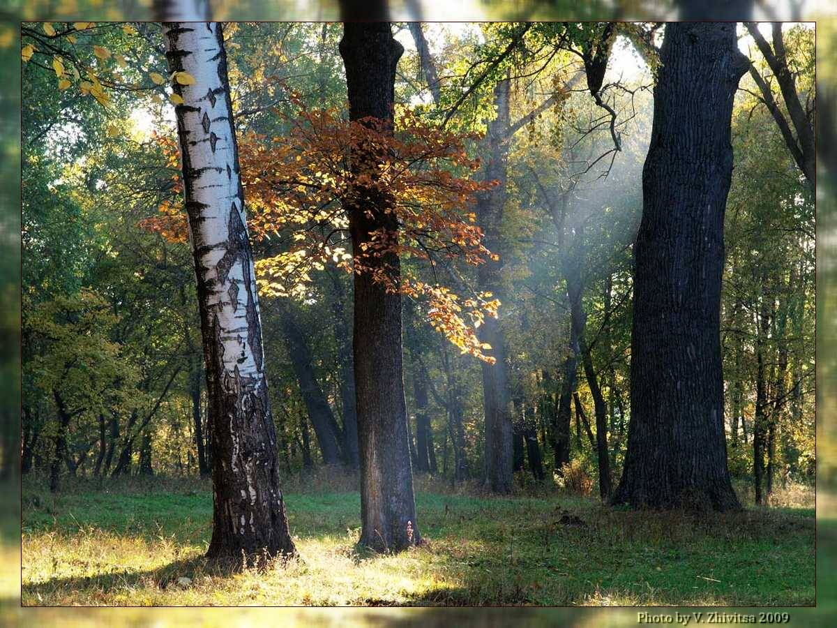 """фото """"Осенний луч"""" метки: пейзаж, лес, осень"""