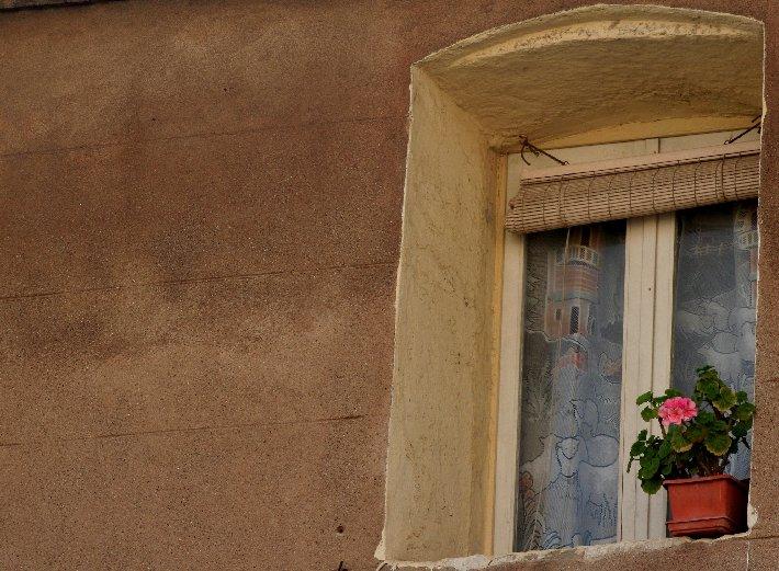 """фото """"flowers to the window"""" метки: город,"""