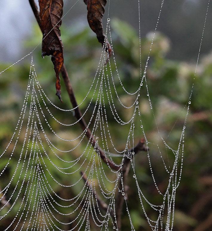 """фото """"Откровение # 7"""" метки: макро и крупный план, природа, насекомое"""