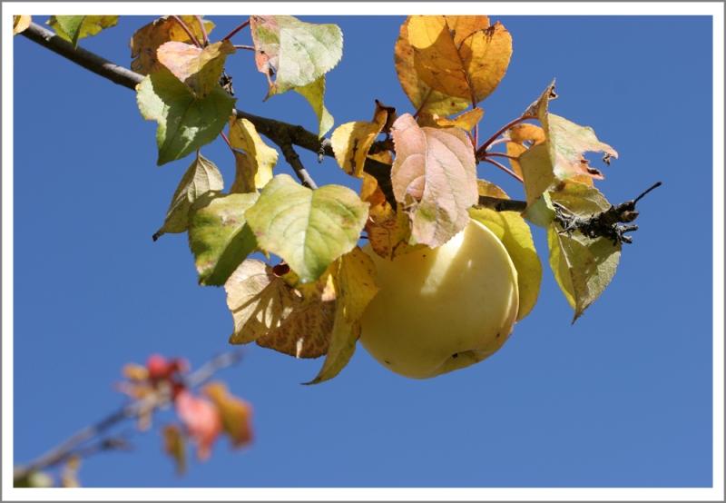 """фото """"Небесное яблоко**"""" метки: пейзаж, осень"""