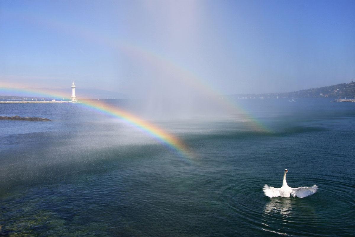 """фото """"Лебедь, радующийся радуге в брызгах фонтана"""" метки: пейзаж, природа, вода, дикие животные"""
