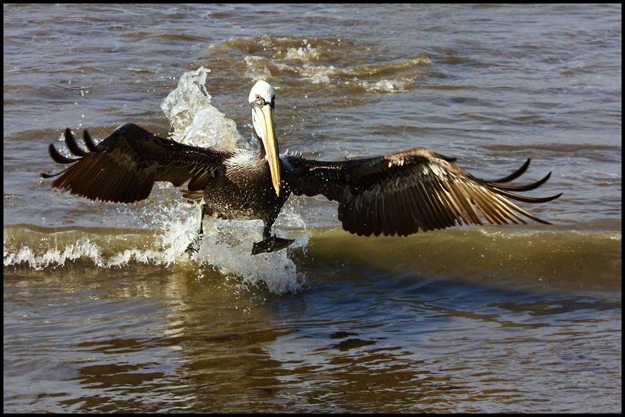 """фото """"one step"""" метки: природа, дикие животные"""