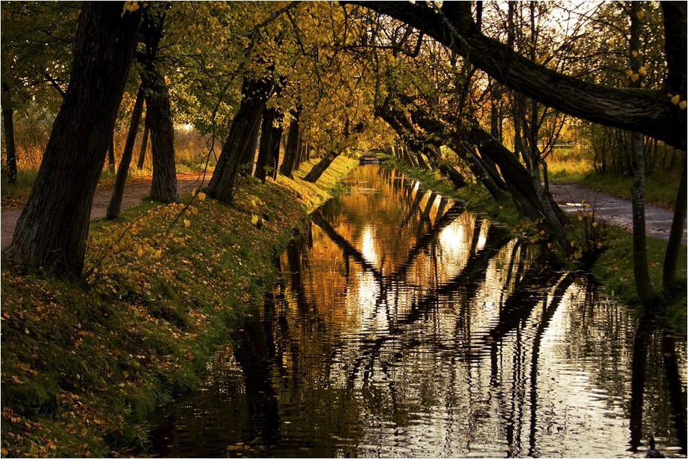 """фото """"Аллея осени"""" метки: пейзаж, лес, осень"""