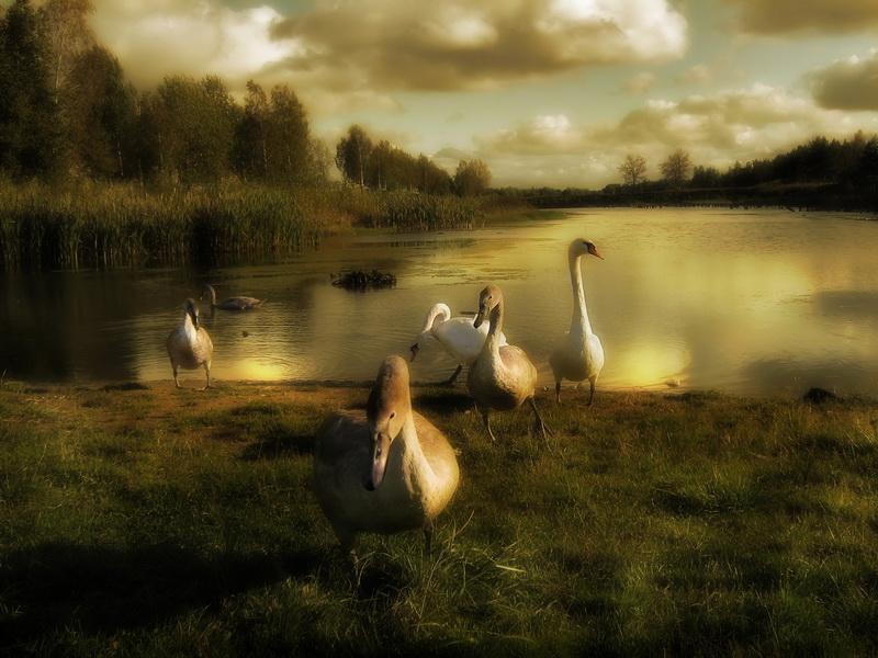 """фото """"попрорщаться  и улетать"""" метки: пейзаж, осень"""