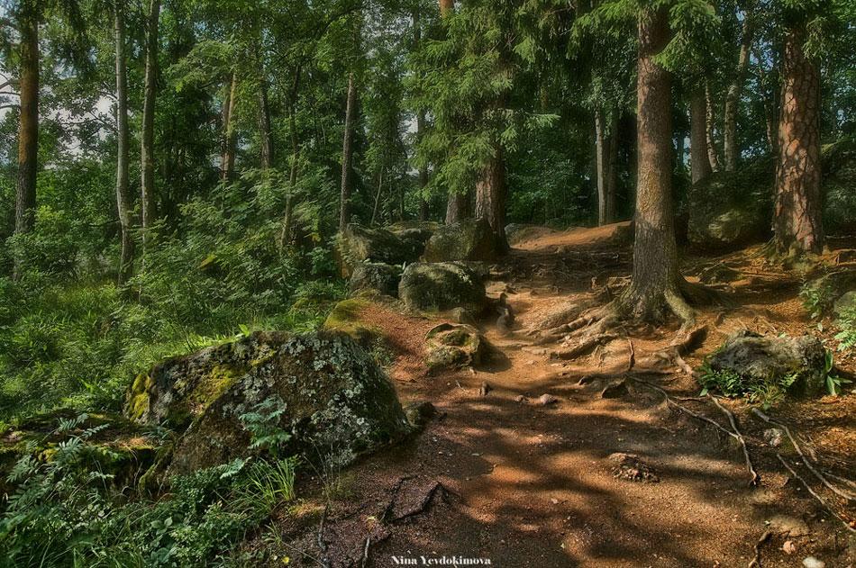"""фото """"Там на неведомых дорожках..."""" метки: пейзаж, лес"""