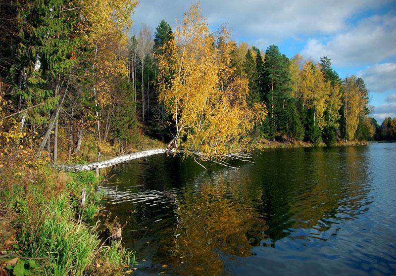 """фото """"Осенний берег"""" метки: пейзаж, осень"""